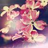 Аватар Цветы (© Mirrorgirl), добавлено: 15.06.2009 12:37