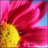 Аватар Розовый цветочек (© Lintu), добавлено: 24.06.2009 10:56