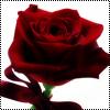 Аватар Роза (© Lintu), добавлено: 24.06.2009 10:57
