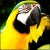 Аватар Попугай (© Lintu), добавлено: 24.06.2009 11:04