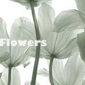 Аватар Цветы вид снизу, Flowers (© Radieschen), добавлено: 24.06.2009 21:17