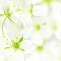 Аватар Маленькие нежные цветочки (© Radieschen), добавлено: 24.06.2009 21:38