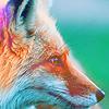 Аватар Мордочка лисы.