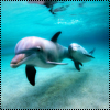 Аватар Дельфины