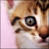 Аватар Котёнок (© Lintu), добавлено: 28.06.2009 13:39