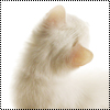 Аватар Белый котик (© Lintu), добавлено: 28.06.2009 13:43