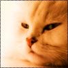 Аватар Перс (© Lintu), добавлено: 28.06.2009 13:44