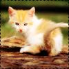 Аватар Рыжий котёнок (© Lintu), добавлено: 28.06.2009 13:52