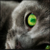 Аватар Зеленоглазый котик (© Lintu), добавлено: 28.06.2009 14:10