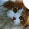 Аватар Котик (© Lintu), добавлено: 28.06.2009 14:12
