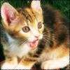 Аватар Котёнок (© Lintu), добавлено: 28.06.2009 14:13