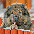 Аватар Большой мохнатый пес (© Radieschen), добавлено: 29.06.2009 17:59