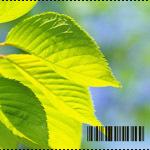 Аватар Зеленые листья (© Ego), добавлено: 18.07.2009 18:44