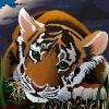 Аватар Грустная тигра (© Anatol), добавлено: 01.08.2009 17:06