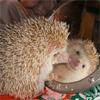 Аватар Ежик у зеркальца (© папайя), добавлено: 09.08.2009 11:28
