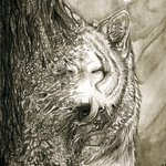 Аватар Лесной дух-7 (© Anatol), добавлено: 29.08.2009 21:11