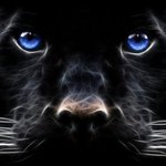Аватар Голубоглазый чёрный кот (© Anatol), добавлено: 02.09.2009 16:02