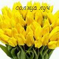 Аватар желтые тюльпаны, солнца луч