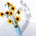 Аватар подсолнухи в вазе (© Radieschen), добавлено: 11.09.2009 08:32