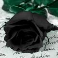 Аватар черная роза (© Radieschen), добавлено: 16.09.2009 19:02