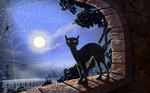 Аватар Чёрный кот, луна, просвечивает сквозь паутину... брр!