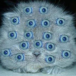 Аватар Глазастая кошка (© Magbet), добавлено: 25.11.2009 11:56