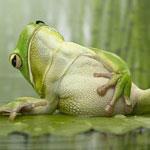 Аватар нажравшаяся жаба.... (© Сабина), добавлено: 06.12.2009 20:23