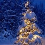 Аватар Елка стоит и подсвечена огнями вечером в зиму (© mnogoliubvi), добавлено: 09.12.2009 22:27