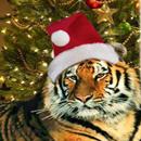 Аватар тигр в шапочке