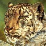 Аватар Тигр (© Anatol), добавлено: 20.12.2009 21:27