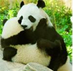 Картинки панды обнимаются