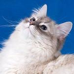 Аватар Милашка (© Electraa), добавлено: 06.01.2010 12:18