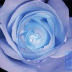 Аватар Синяя роза (© Юки-тян), добавлено: 11.01.2010 14:11