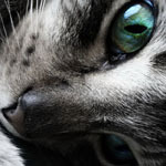 Аватар Кошка (© ColniwKo), добавлено: 14.01.2010 00:14