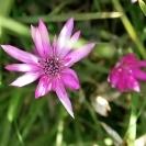 Аватар 2 цветка (© Юки-тян), добавлено: 16.01.2010 17:40