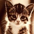 Аватар милый котенок