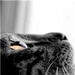 Аватар Котик (© Electraa), добавлено: 27.01.2010 18:58