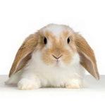 Аватар кролик (© Electraa), добавлено: 29.01.2010 17:53