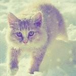 Аватар котик в снегу (© Electraa), добавлено: 03.02.2010 17:03