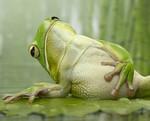 Аватар Самодовольная лягушка (© Anatol), добавлено: 04.03.2010 17:51