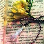 Аватар Цветы на книге (© ColniwKo), добавлено: 09.03.2010 20:29