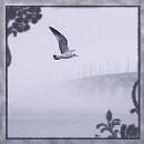 Аватар чайка в тумане