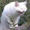 Аватар Ржу (© Юки-тян), добавлено: 19.03.2010 20:20