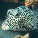 Аватар Странная рыба