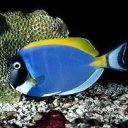 Аватар Рыба
