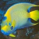 Аватар Тропическая рыбка