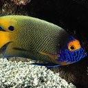 Аватар Тропическая рыбка.