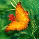 Аватар Яркая бабочка
