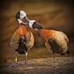 Аватар Поцелуй птичек