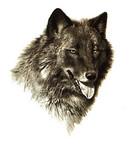 Аватар Волк (набросок карандашом) (© Anatol), добавлено: 09.05.2010 16:50